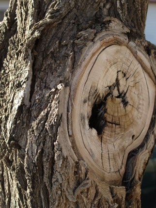 Interesting tree texture