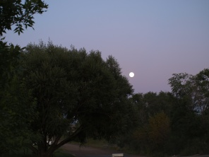 Moonrise above MY Tree